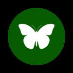 icona farfalla oasi rossi
