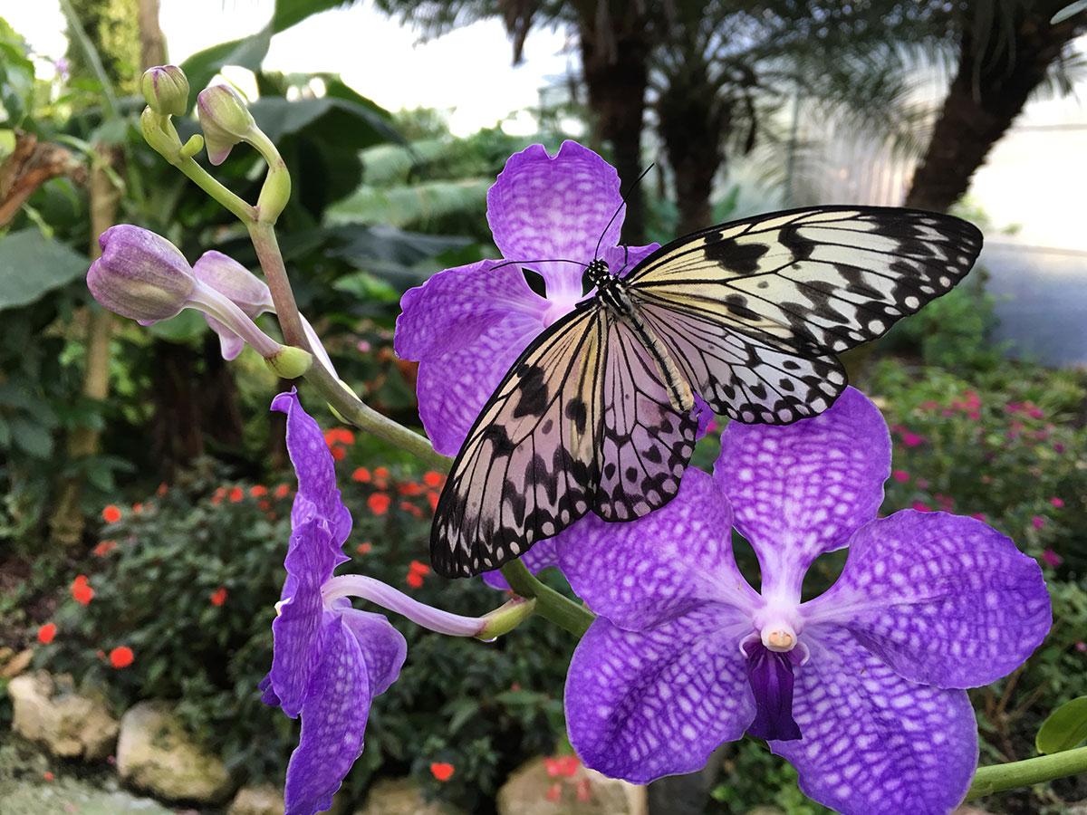 Oasi delle Farfalle Rossi