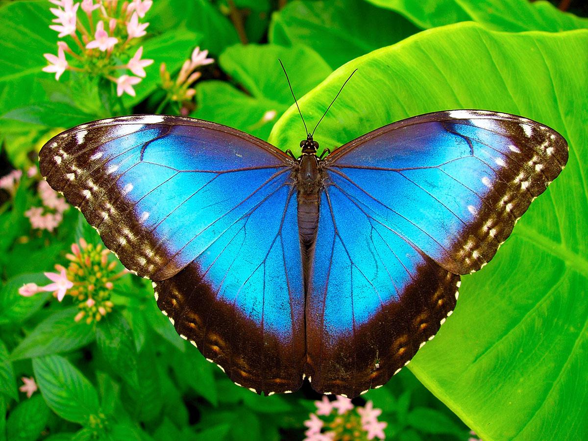 Oasi delle Farfalle tropicali